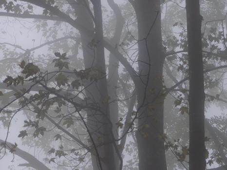 Jahreskreis - Samhain 1. November - Allerheiligen, Mondfest