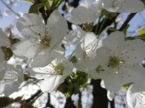 Jahreskreis Beltane 30. April - Mondfest