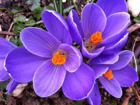 Jahreskreis Frühlingstagundnachtgleiche 21. März - Sonnenfest, Wendepunkt